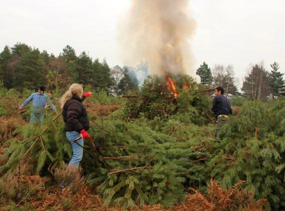 Burning trees - Winter Pimms 2016