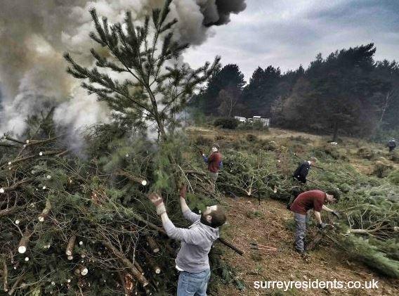 Tree burning wide shot - Winter PImms 2016